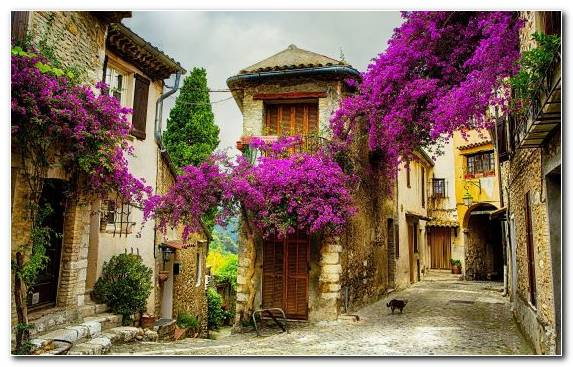 Image Medieval Architecture Facade Street Flower Farmhouse