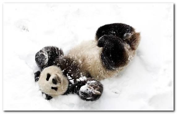 Image Mei Xiang Stuffed Toy Giant Panda San Diego Zoo Fur