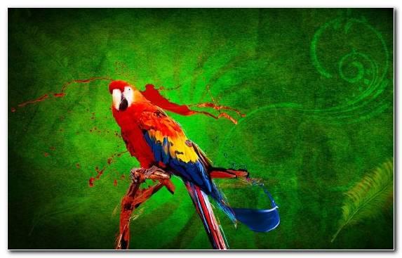 Image Mercedes Benz Sls Amg Green Bird Digital Art Macaw