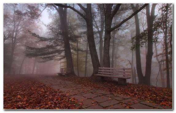 Image Mist Fog Wall Tree Landscape