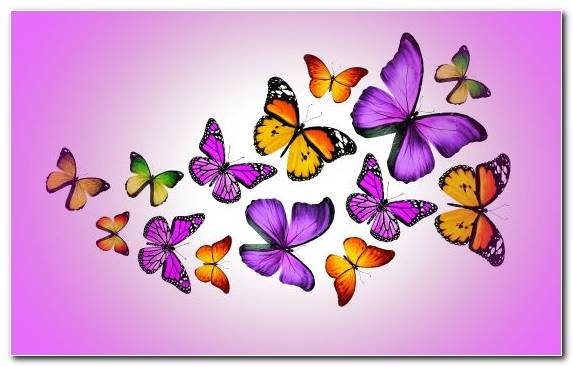Image Monarch Butterfly Invertebrate Butterfly Flower Purple