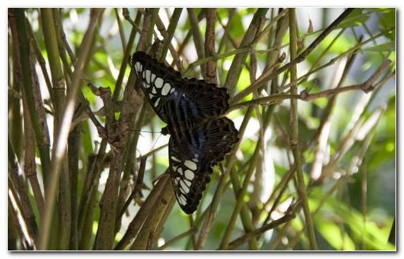 Image Monarch Butterfly Moth Plants Brush Footed Butterfly Insect