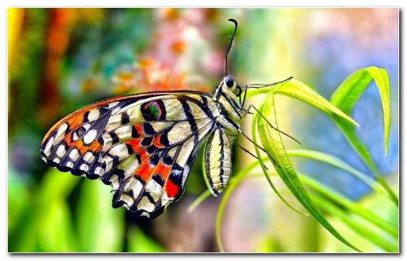 Image Monarch Butterfly Moths And Butterflies Invertebrate Pollinator Youtube