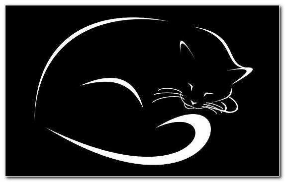 Image Monochrome Photography 3d Computer Graphics Kitten Black Cat Black And White