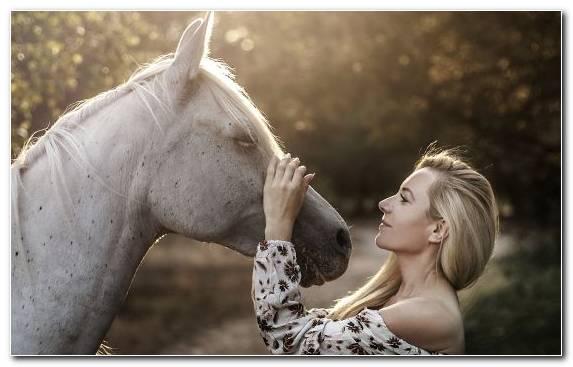 Image mood mane beauty horses horse