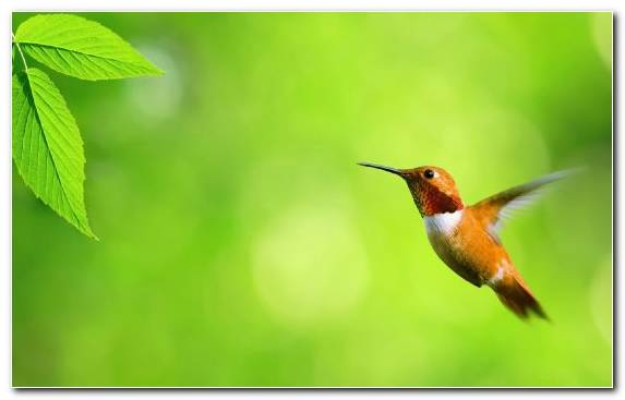 Image Morning Wing Beak Bird Wildlife