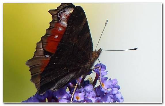 Image Moth Arthropod Invertebrate Pollinator Butterfly