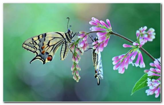Image Moth Flora Borboleta Moths And Butterflies Insect