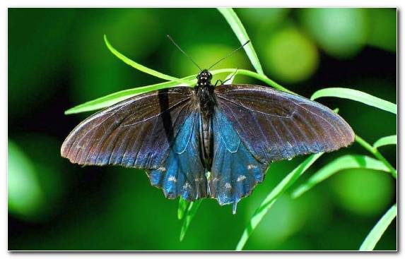 Image Moth Lycaenid Leaf Butterfly Brush Footed Butterfly