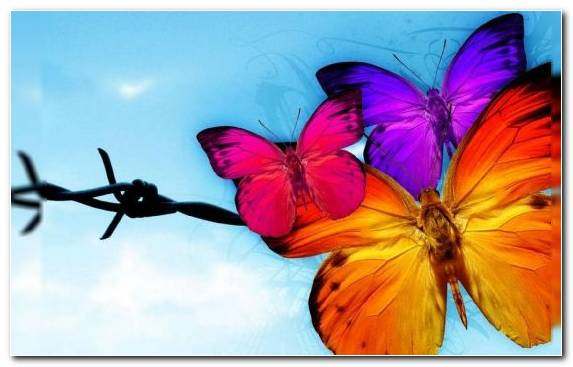 Image Moths And Butterflies Brush Footed Butterfly Flower Insect Butterfly