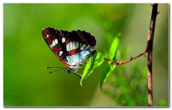 Image moths and butterflies brush footed butterfly leaf butterfly lycaenid