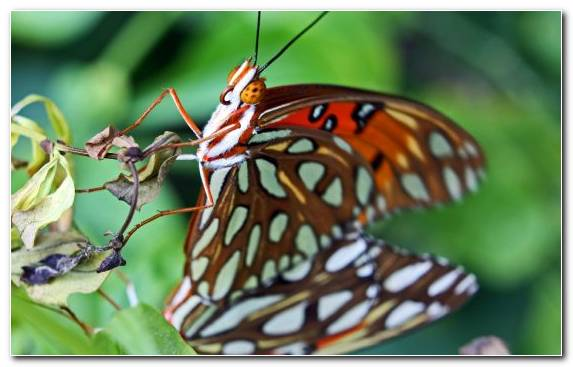 Image Moths And Butterflies Butterfly Insect Pollinator Monarch Butterfly