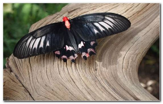 Image Moths And Butterflies Butterfly Invertebrate Arthropod Insect