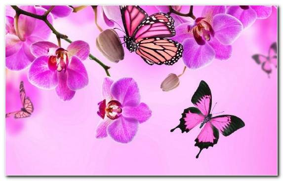 Image Moths And Butterflies Flower Flower Bouquet Violet Purple