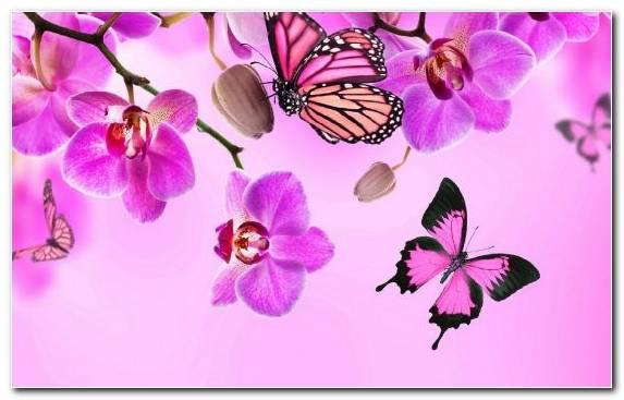 Image Moths And Butterflies Flower Flower Bouquet Violet Purple