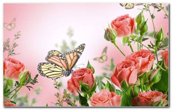 Image Moths And Butterflies Insect Floral Design Rose Family Flower Bouquet