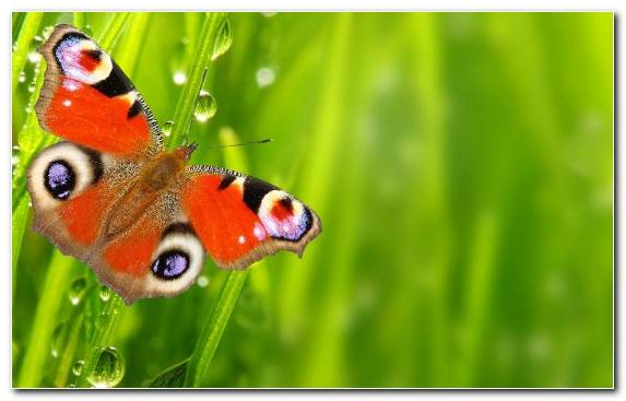 Image Moths And Butterflies Invertebrate Ecosystem Butterfly Brush Footed Butterfly