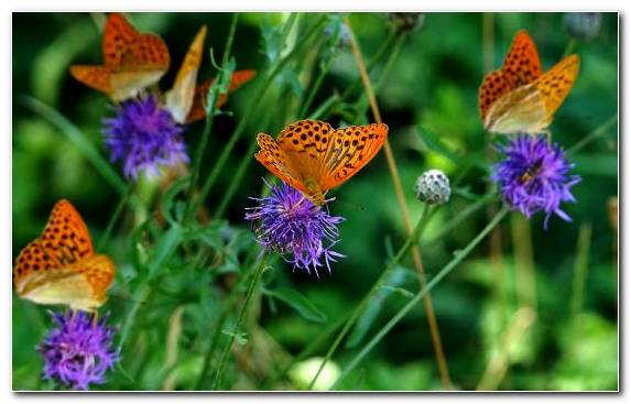 Image Moths And Butterflies Invertebrate Flower Pollinator Nectar