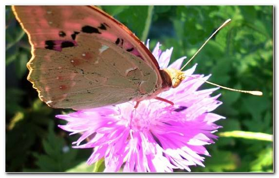 Image Moths And Butterflies Nectar Pieridae Invertebrate Pollinator