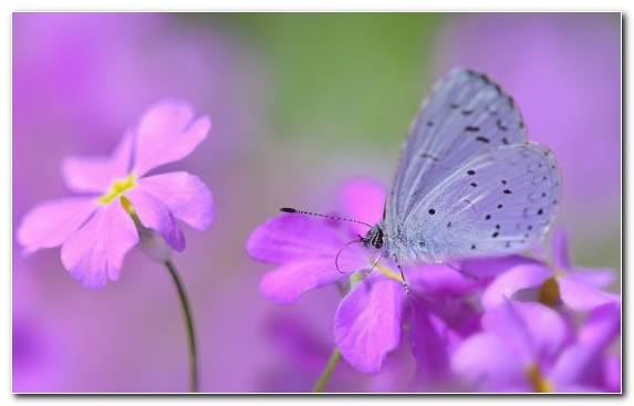 Image Moths And Butterflies Petal Nectar Insect Butterfly