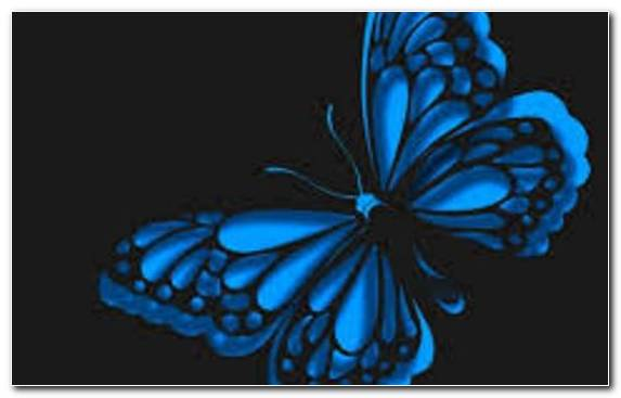 Image Moths And Butterflies Pollinator Symmetry Blue Purple