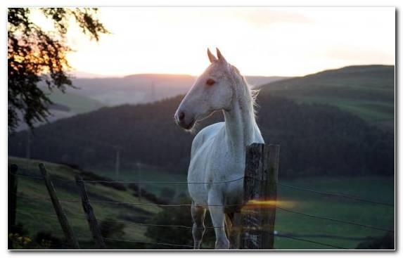 Image Mountainous Landforms Mountain Horses Mane Horse