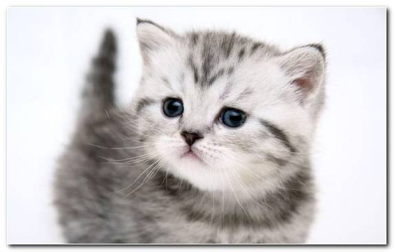 Image moustache cheetah meow eye cat