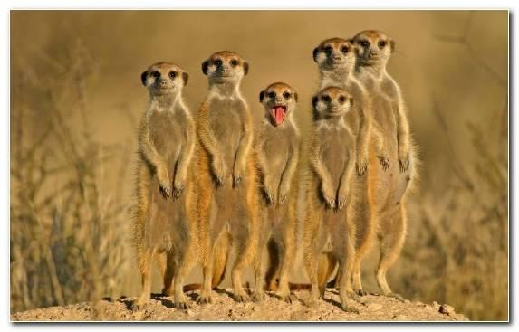 Image Moustache Ecoregion Wildlife Zoo Terrestrial Animal