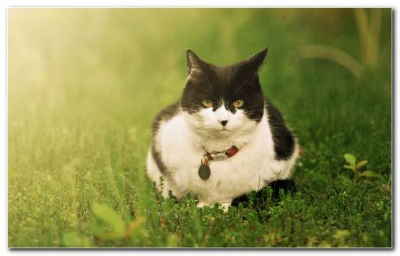 Image Moustache Kitten Small To Medium Sized Cats Grass Family Snout