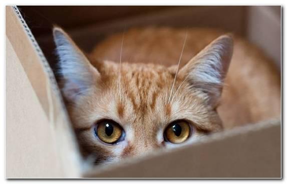 Image moustache whiskers dog like mammal eye kitten