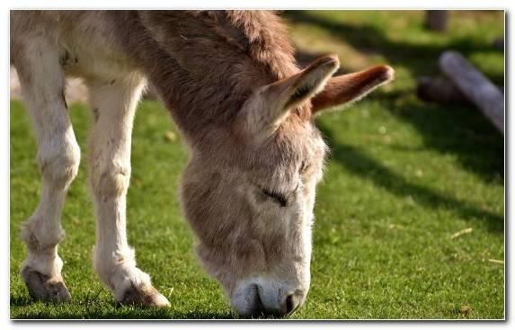 Image Mule Horse Snout Terrestrial Animal Horses