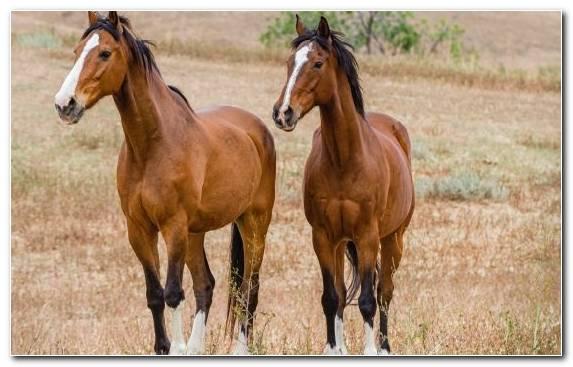 Image Mustang Grazing Horses Stallion Ecoregion