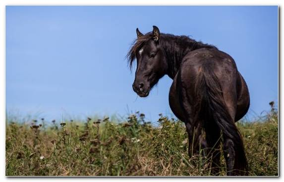 Image Mustang Grazing Mustang Horse Wildlife Pasture