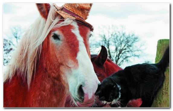 Image Mustang Horse Draft Horse Horses Snout Shire Horse