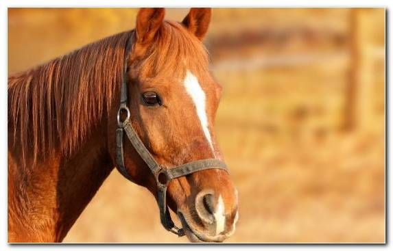 Image Mustang Horse Education Rein Pet Agriculture