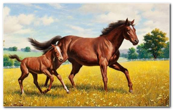 Image Mustang Horse Infant Canvas Painting White