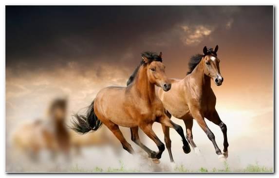 Image mustang horse mane mare livestock stallion