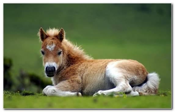 Image Mustang Horse Mane Wildlife Pony Horse