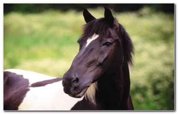 Image Mustang Horse Mare Livestock Horse Collection