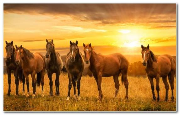 Image Mustang Horse Mustang Arabian Horse Ecosystem Grazing