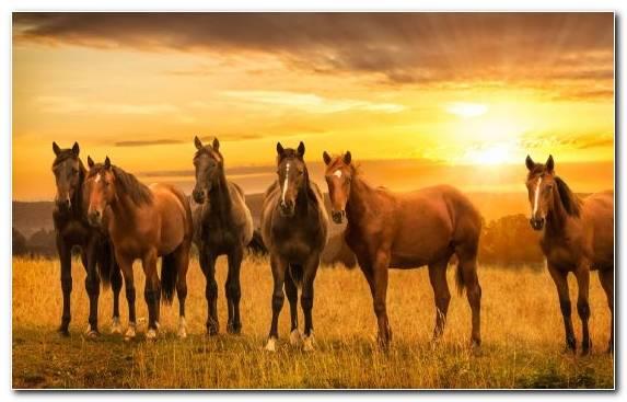 Image Mustang Horse Prairie Herd Painting Bay