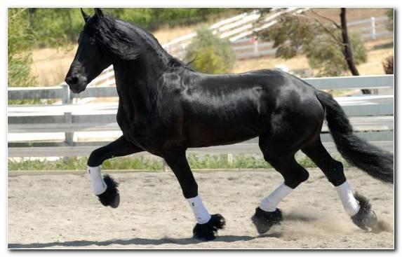 Image Mustang Horse Rein Mane Stable Stallion