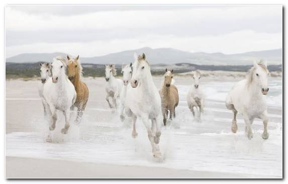 Image Mustang Horse Snow Herd Wild Horse Mare