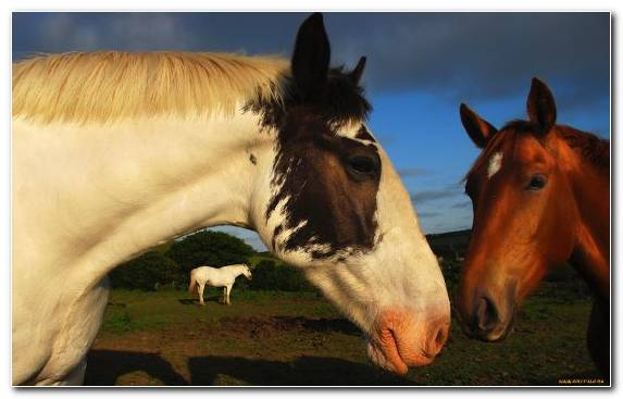 Image mustang horse stallion livestock horse mane