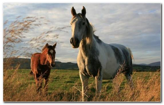 Image Mustang Horse Steppe Mare Ecosystem Foal