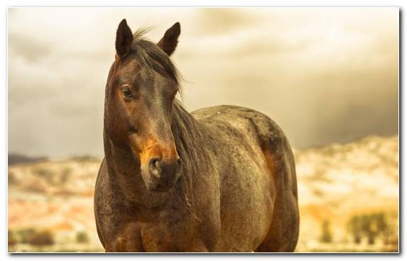 Image Mustang Horse Wildlife Livestock Stallion Horse