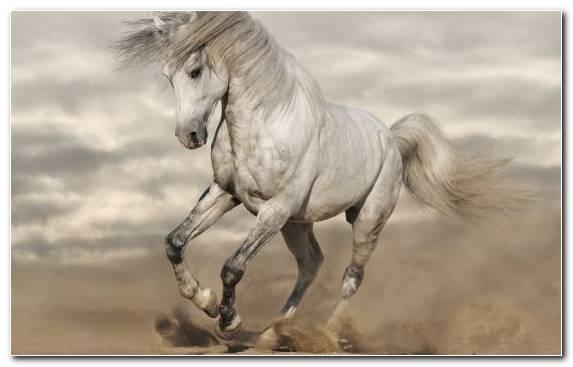 Image Mustang Horse Wildlife Stallion Ecoregion Horse