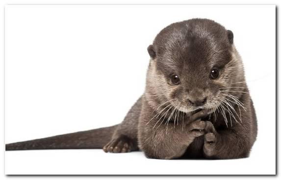 Image Mustelidae Mammal Marine Mammal Otter Fauna