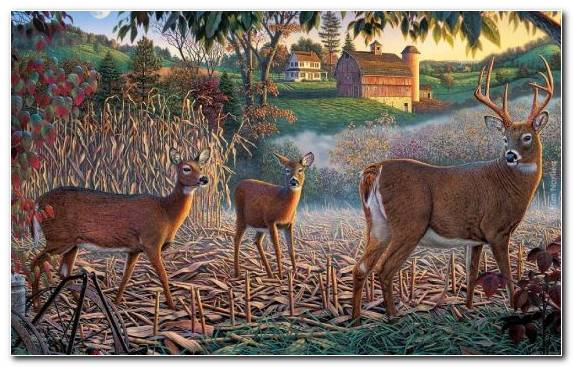 Image National Park Deer Jigsaw Puzzles Grass Creative Arts