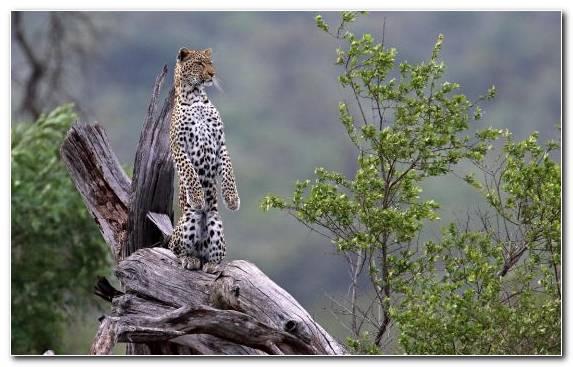 Image National Park Tree Kruger National Park Ngorongoro Conservation Area Cheetah